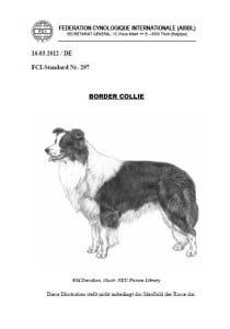 Border Collie FCI Standard