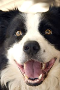 Border Collie in Not aus dem Tierheim