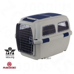 IATA Flugbox Border Collie