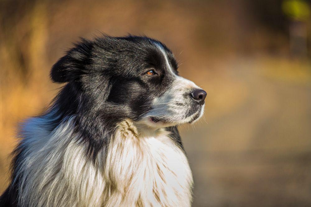 hund blähungen durchfall