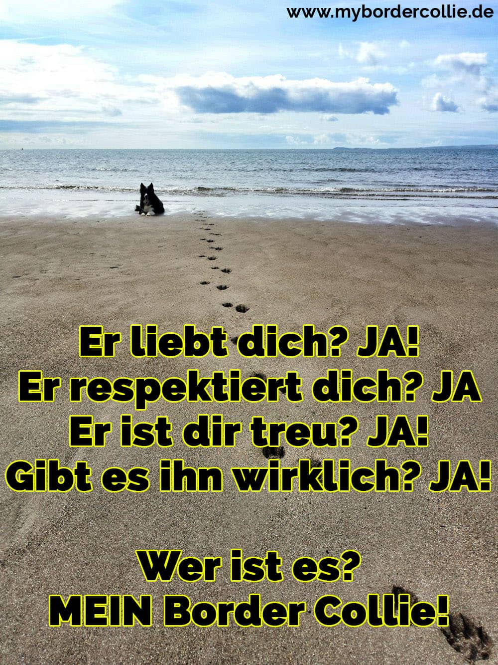 Ein Border Collie am Strand
