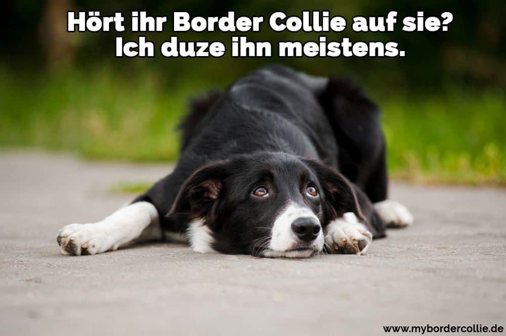 Ein Border Collie auf dem Boden liegend