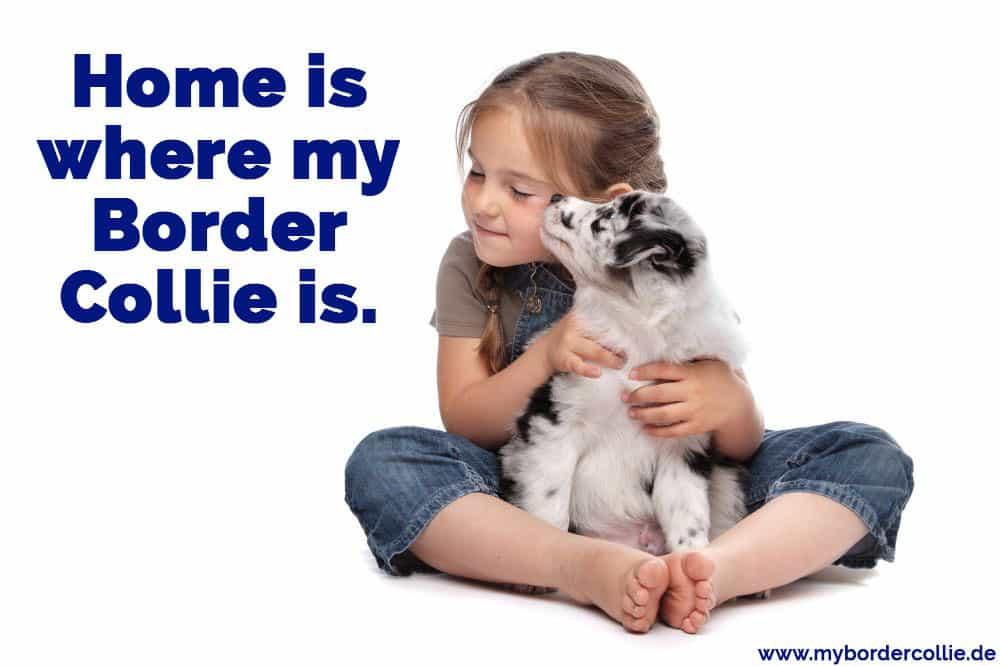 Ein Mädchen umarmt ihren Border Collie