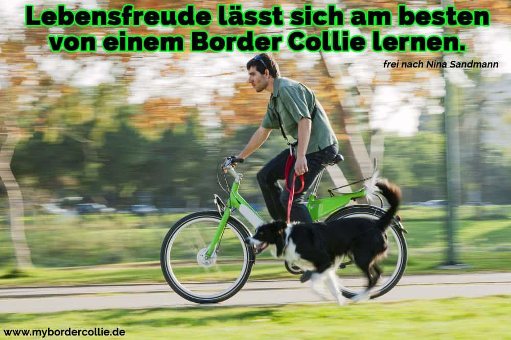 Der Border Collie, die entlang seinem Trainer im Park Radfahren