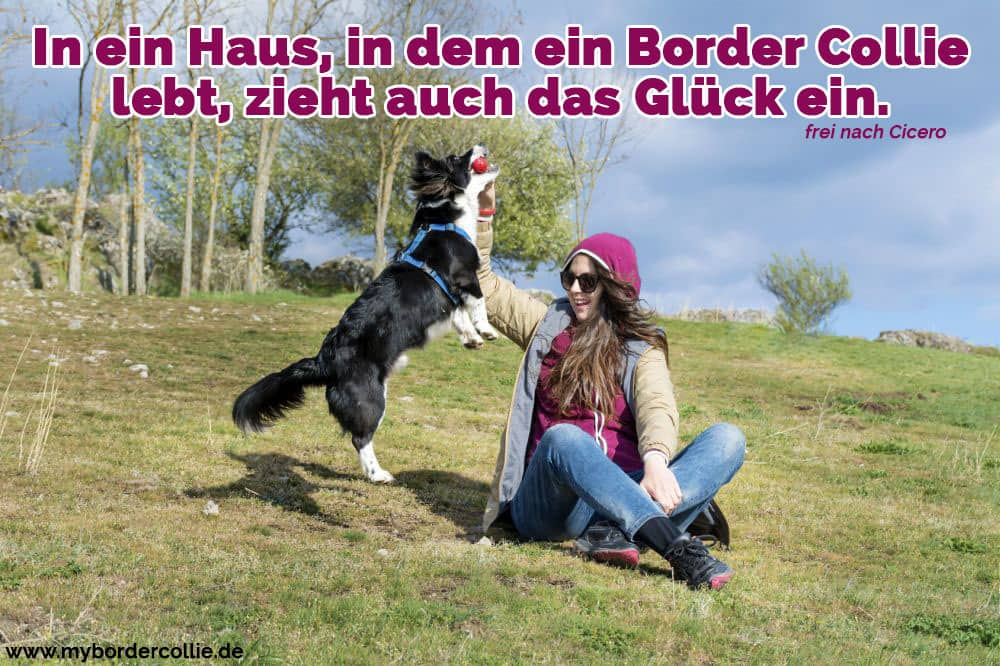 Eine Frau spielt mit ihrem Border Collie im Park