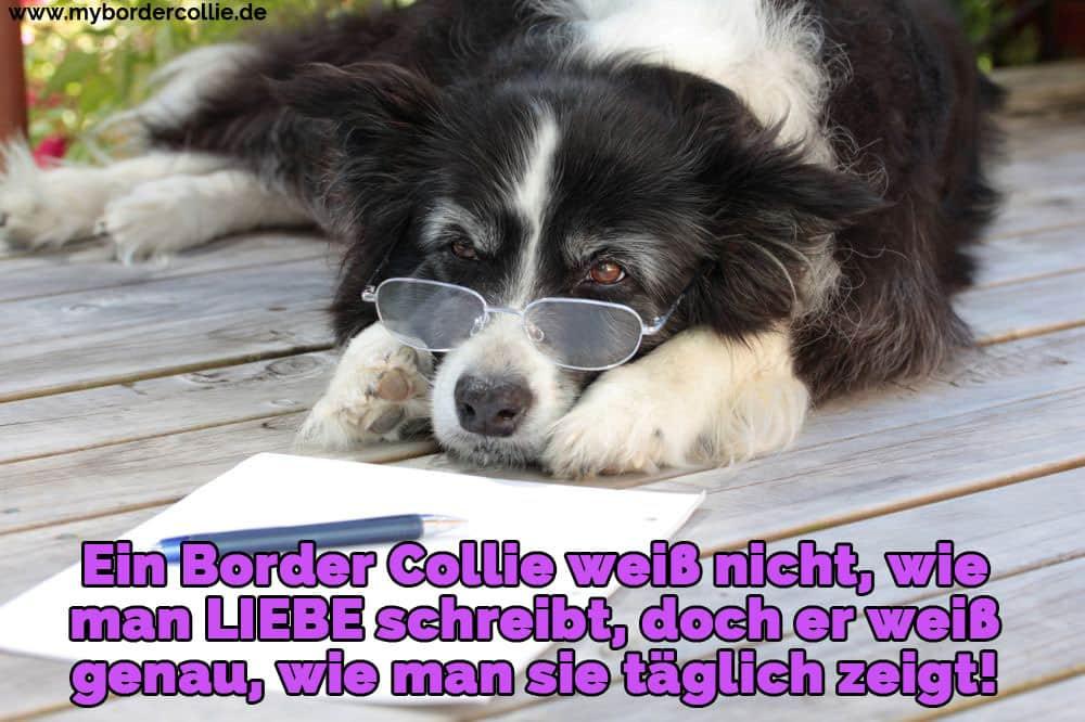 Ein Border Collie lernen