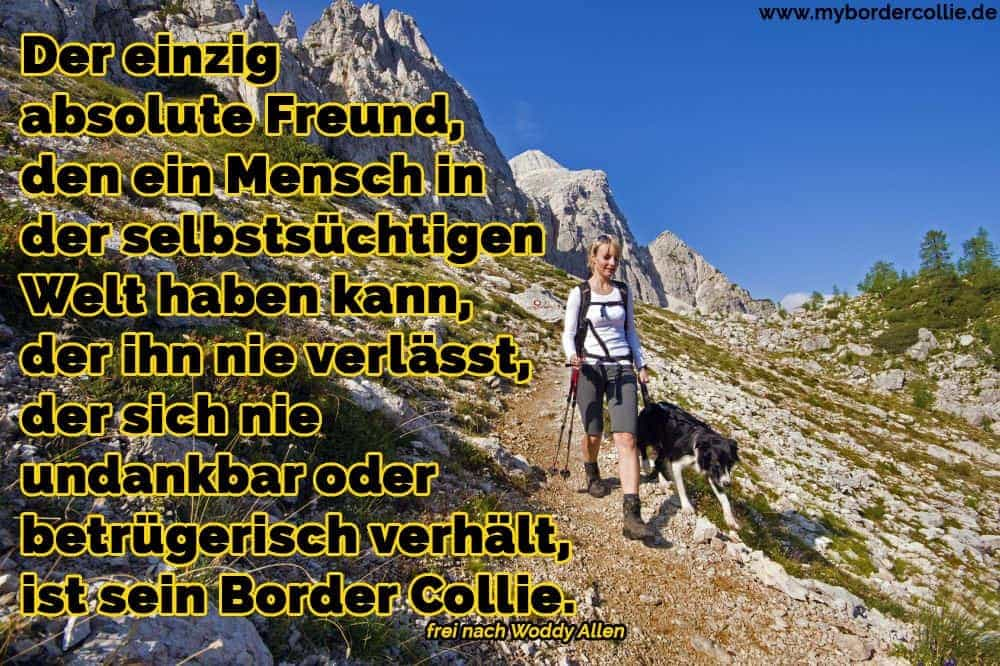 Ein Border Collie in den Bergen