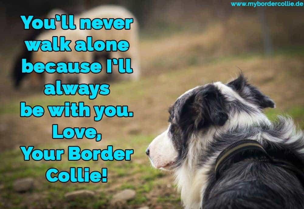 Ein Border Collie traurig