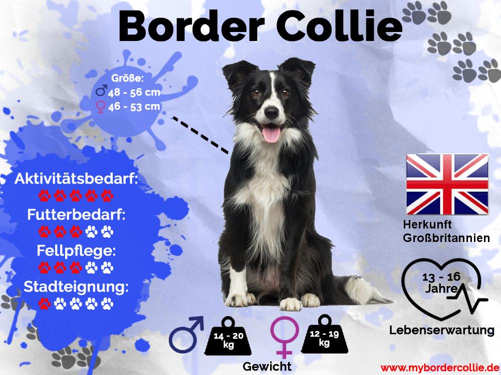 Border Collie Charakter Und Wesen Mybordercollie De